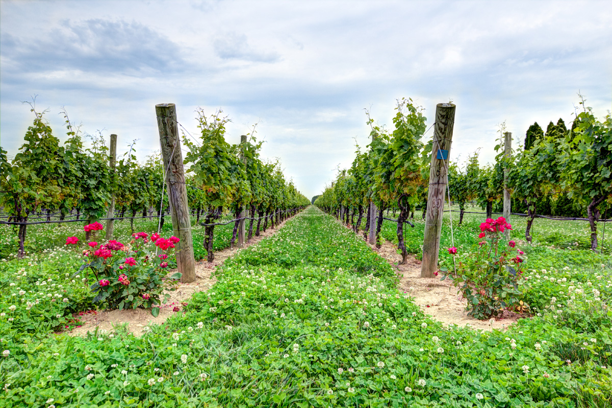 Winery Tours Long Island From Nyc